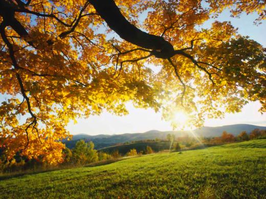 Autumn Health Care