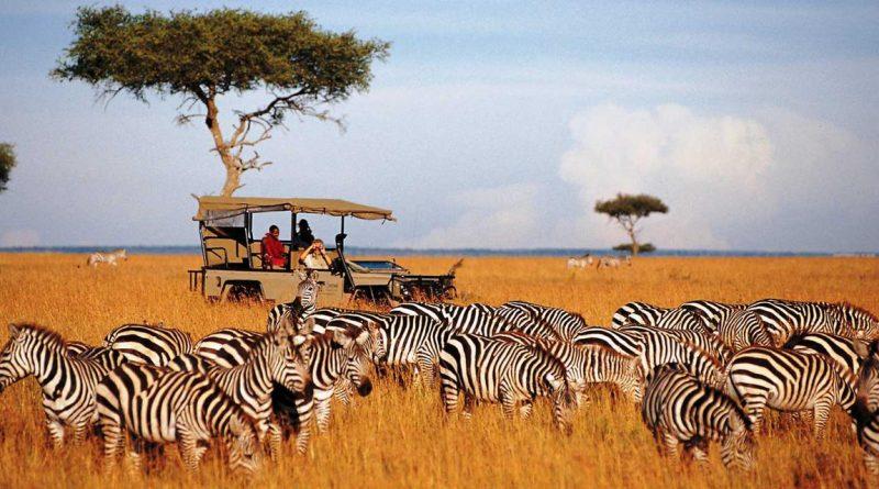 Kenya Safaris-Most Memorable Wildlife Safaris